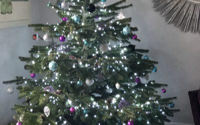 Happy Christmas from the Clara Bee Team