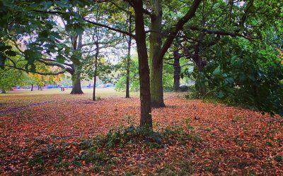 Autumn positives